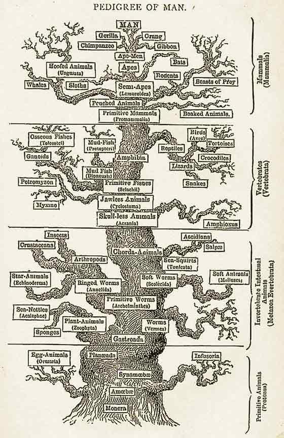 darwins-tree-of-life-2
